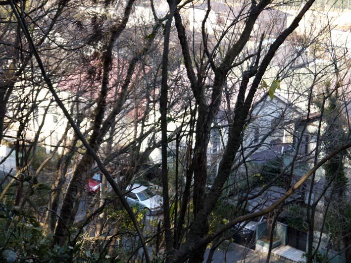 12年初の六国見山森林公園の臨時手入れ終了(1・14)_c0014967_1854378.jpg
