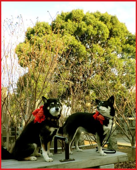 青山花紀行。冬散歩も楽しいね!_e0236072_21174031.jpg