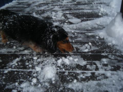 雪遊び♪_b0186183_1818211.jpg