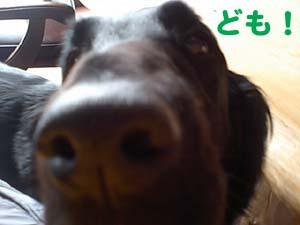 タミアで〜〜〜す。_b0084194_122120100.jpg