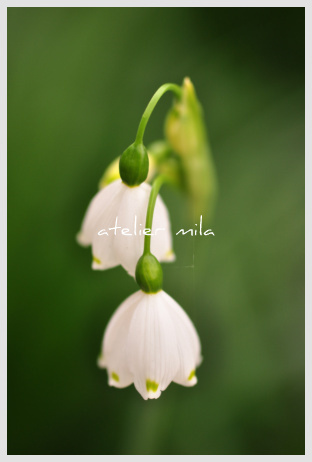 新春 2012年_d0154102_52563.jpg