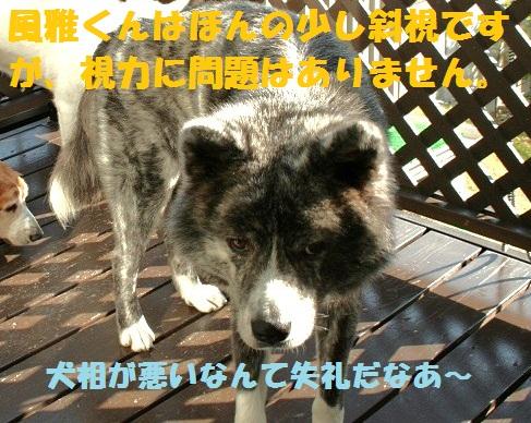 f0121712_22225119.jpg