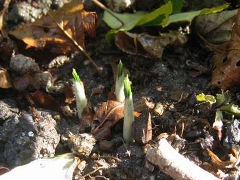 冬の裏庭_c0134734_8165662.jpg