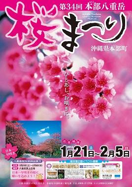 沖縄はもう 桜まつりですよ〜_d0100638_2041774.jpg