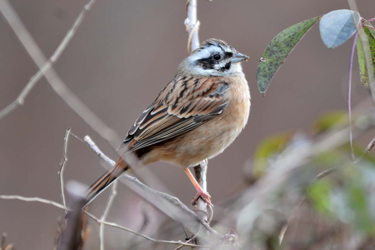 今年は冬鳥が非常に少ない_c0129047_2225112.jpg