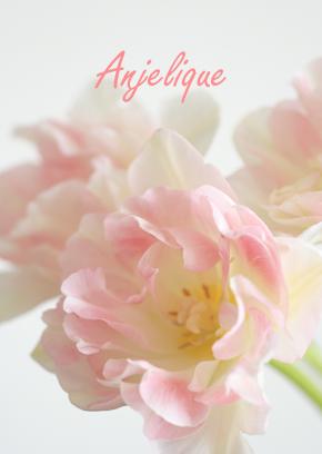Angeliqueの花言葉_d0113182_20511636.jpg