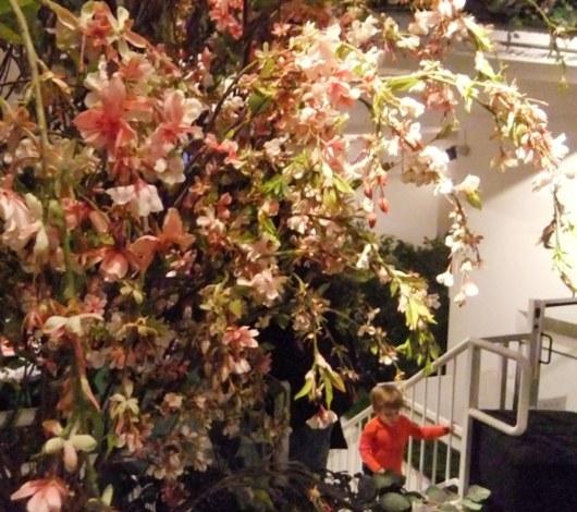 今年もNYのギャラリーが緑いっぱいの室内公園に Park Here_b0007805_2061445.jpg