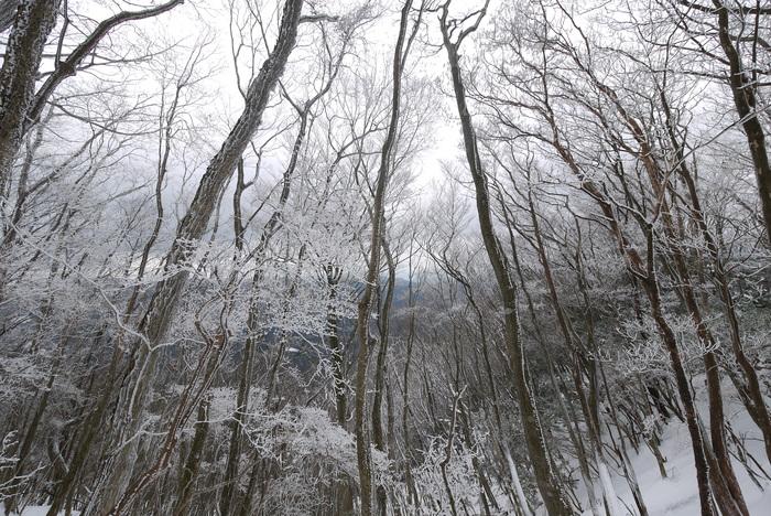 霧氷の高見山_e0214805_703571.jpg