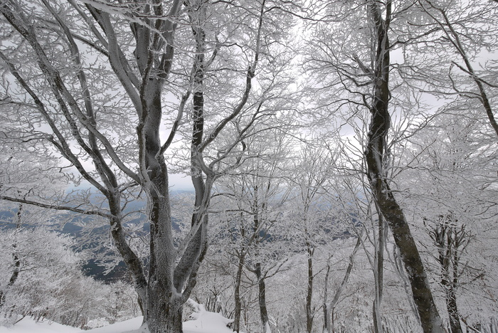 霧氷の高見山_e0214805_724053.jpg