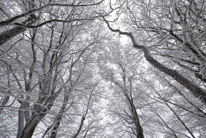 霧氷の高見山_e0214805_73664.jpg