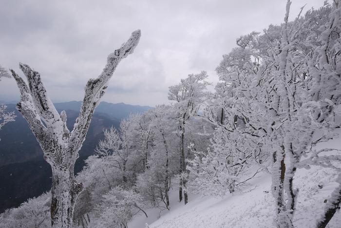 霧氷の高見山_e0214805_74545.jpg