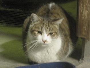 迷子猫のお友だち ちょんちょこりんちゃん編。_a0143140_23144292.jpg