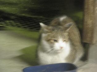 迷子猫のお友だち ちょんちょこりんちゃん編。_a0143140_2315289.jpg