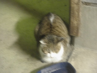 迷子猫のお友だち ちょんちょこりんちゃん編。_a0143140_2317621.jpg