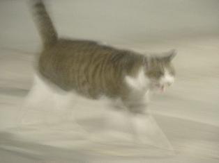 迷子猫のお友だち ちょんちょこりんちゃん編。_a0143140_2318710.jpg