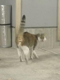 迷子猫のお友だち ちょんちょこりんちゃん編。_a0143140_23195367.jpg