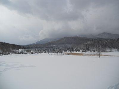 冬の芽_a0162646_21316100.jpg