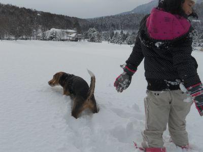 冬の芽_a0162646_21384634.jpg