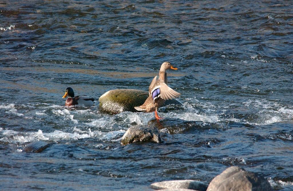 水鳥を狙うぞ・・・その1_b0029350_2313331.jpg