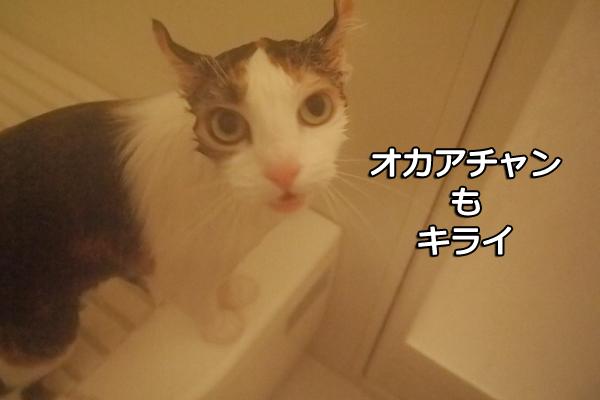 b0141397_1055694.jpg