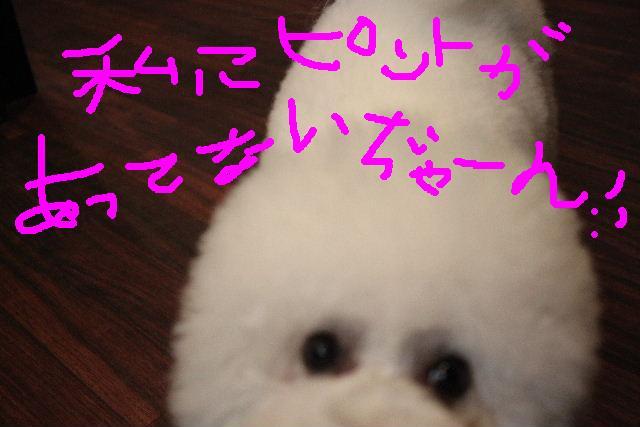 b0130018_13451291.jpg