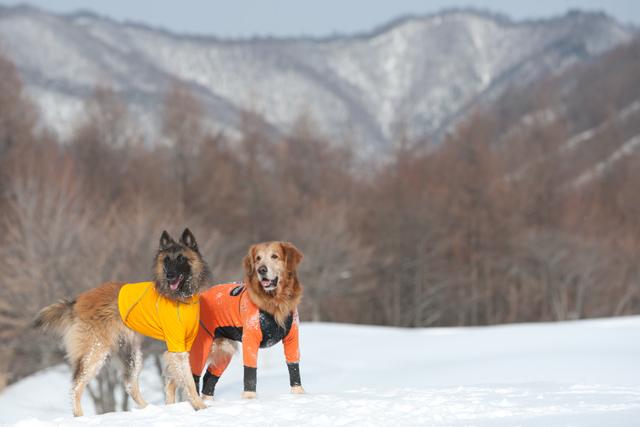 2012 雪遊び 2回目_e0192921_20243892.jpg