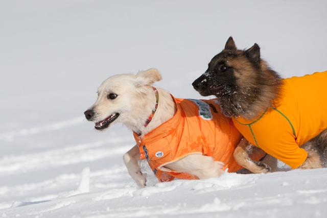 2012 雪遊び 2回目_e0192921_20244037.jpg