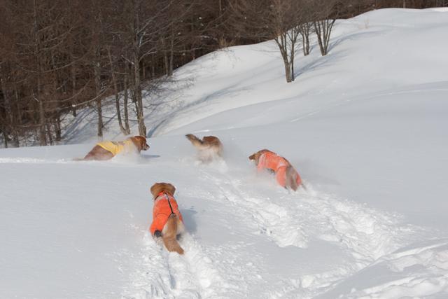 2012 雪遊び 2回目_e0192921_20244197.jpg