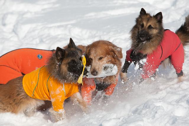 2012 雪遊び 2回目_e0192921_20244345.jpg