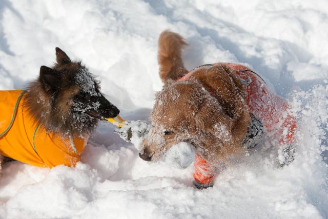2012 雪遊び 2回目_e0192921_20244461.jpg
