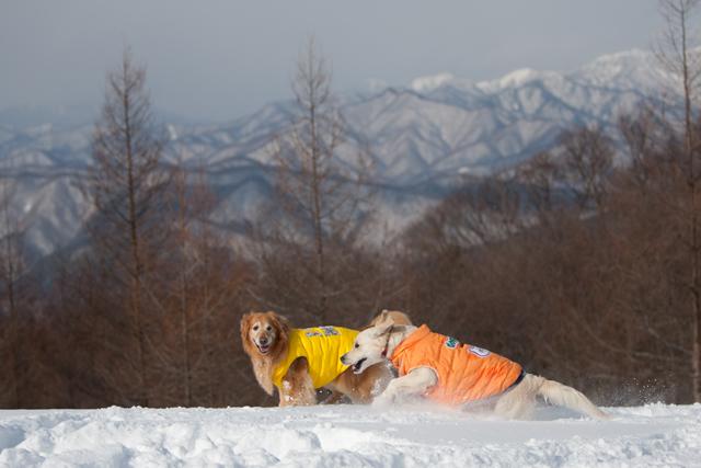 2012 雪遊び 2回目_e0192921_20244860.jpg
