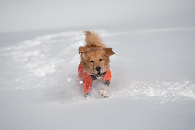 2012 雪遊び 2回目_e0192921_20245089.jpg