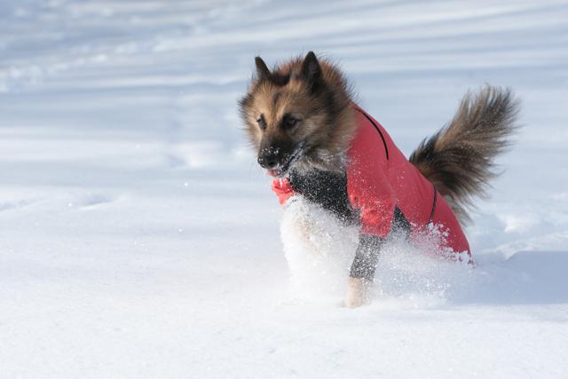 2012 雪遊び 2回目_e0192921_2024591.jpg