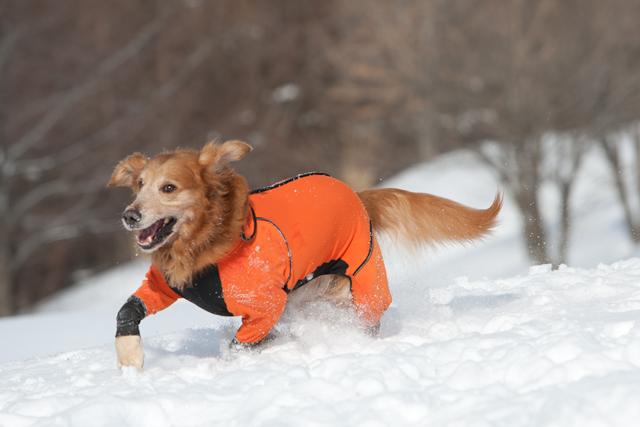 2012 雪遊び 2回目_e0192921_2025164.jpg