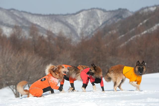 2012 雪遊び 2回目_e0192921_20255776.jpg