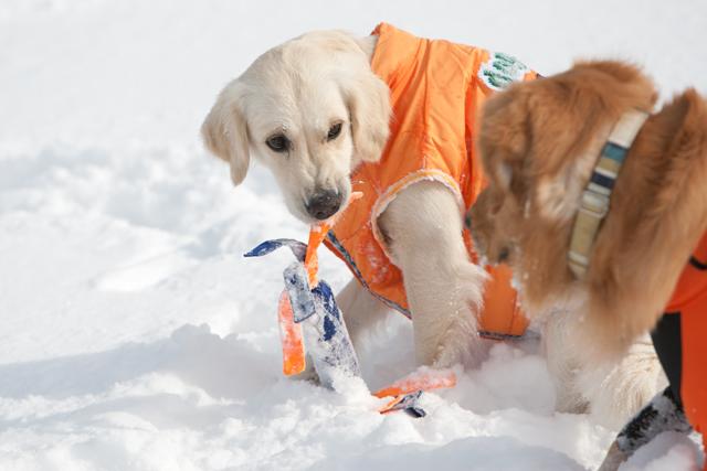 2012 雪遊び 2回目_e0192921_2041180.jpg