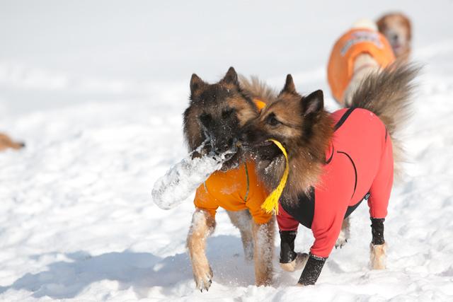 2012 雪遊び 2回目_e0192921_204407.jpg