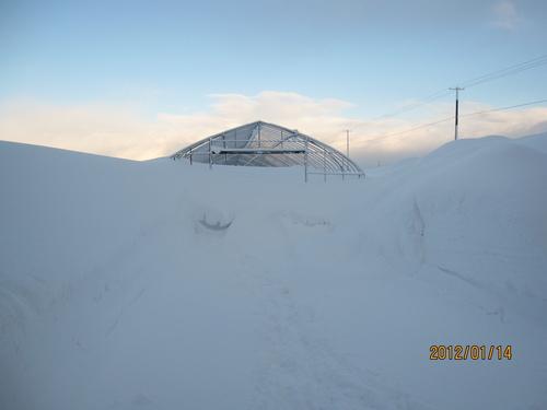 *厳寒・ドカ雪*_f0231042_2011373.jpg