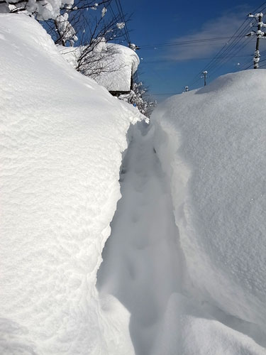 ドカドカ雪の岩見沢は災害か・・_c0189970_17543978.jpg