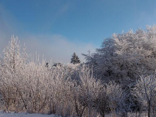 霜って美しい_a0116902_2403285.jpg