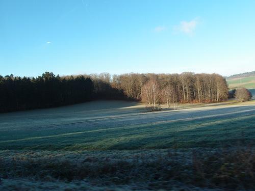 霜って美しい_a0116902_2452521.jpg