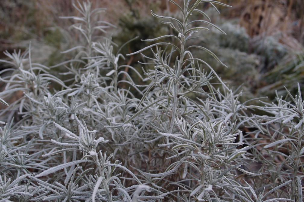 霜って美しい_a0116902_249060.jpg