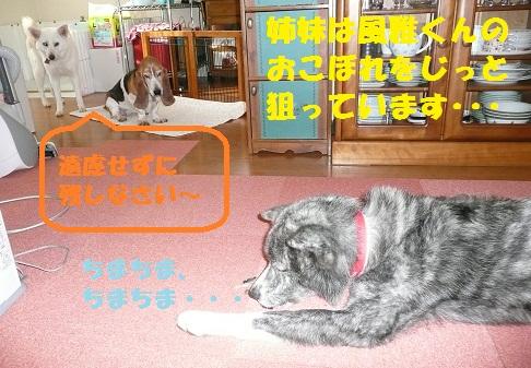 f0121712_14183640.jpg