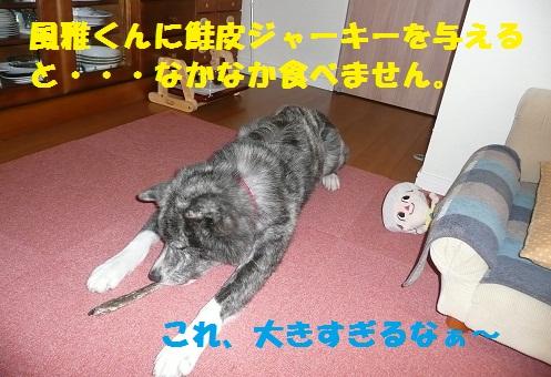 f0121712_1418894.jpg