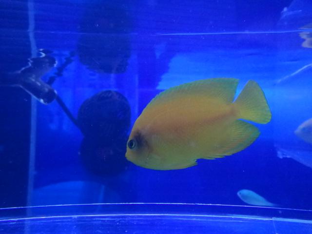 海水魚・水草・淡水魚_f0189122_12565668.jpg