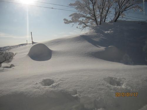 積雪194センチ 岩見沢限界!_f0231042_14115612.jpg