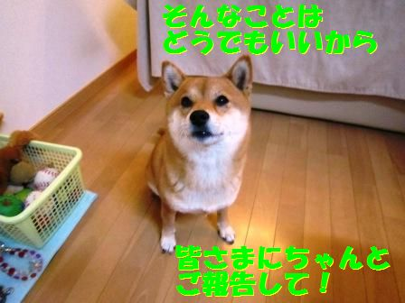 c0171368_22165279.jpg