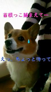 b0076384_2221257.jpg