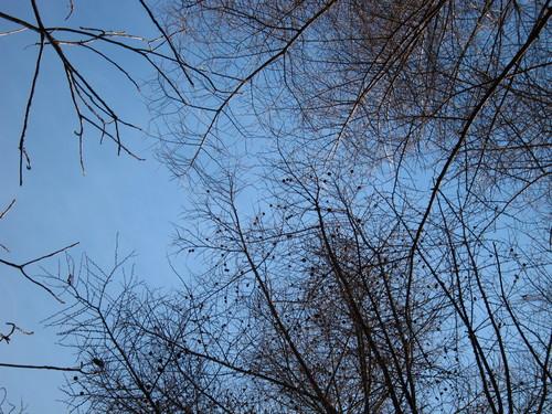 晴天続きです。_d0133485_13572991.jpg