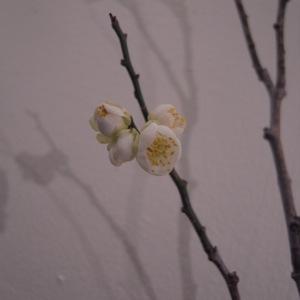 小梅が咲いた_d0104091_19162185.jpg